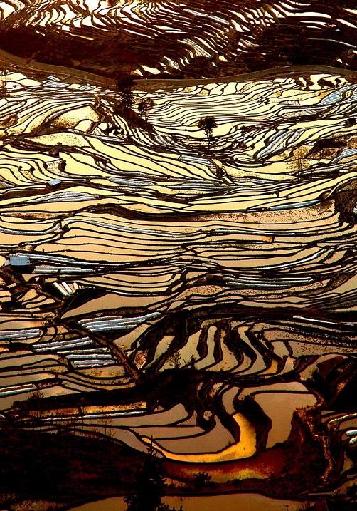 Рисовые террасы Хунхэ-Хани в Китае. Фото