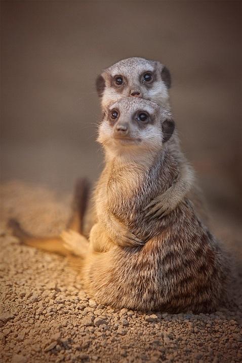 Животные обнимаются. Фото