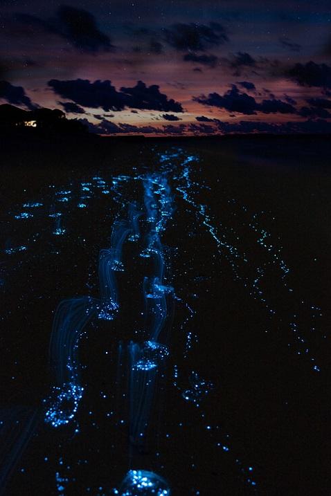 Необычный светящийся пляж на Мальдивах. Фото