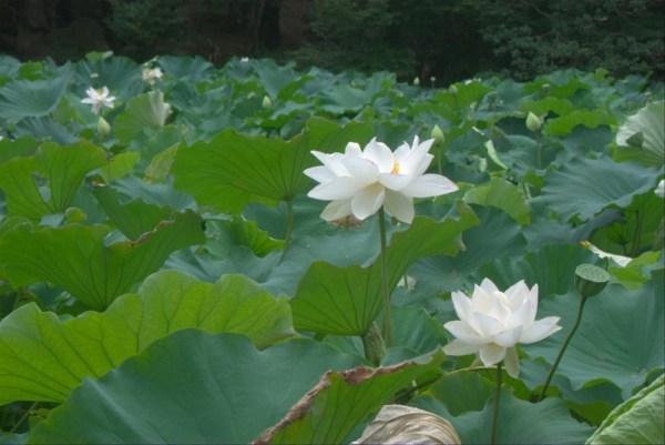 Японский парк Кераку-эн. Часть 1 (29 фото)