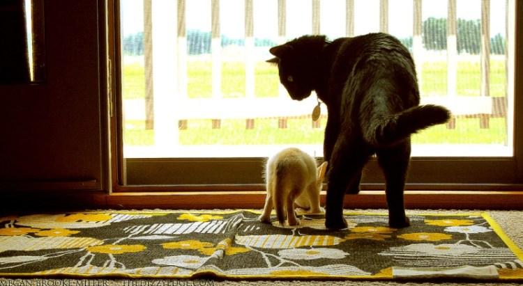 Детеныш фенека и кот. Фото