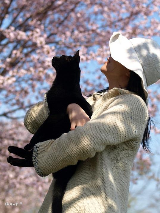 Кот и девушка у сакуры. Фото
