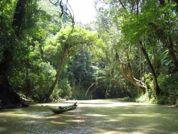 В лесах острова Калимантан. Малайзия. Фото