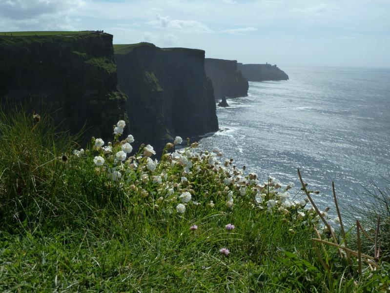 Утесы Мохер в Ирландии. Фото