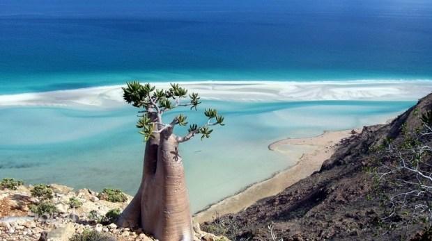 Удивительный остров Сокотра. Фото