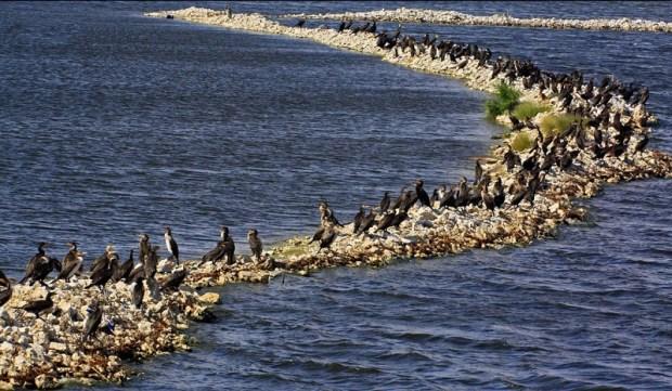 Природа острова Сокотра. Йемен. Фото
