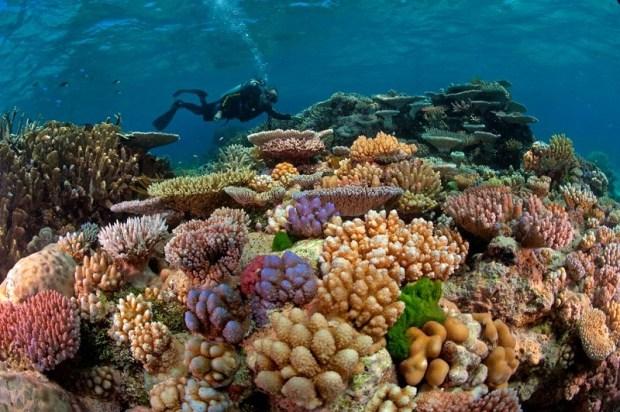 Большой Барьерный риф. Австралия. Красивое фото кораллов