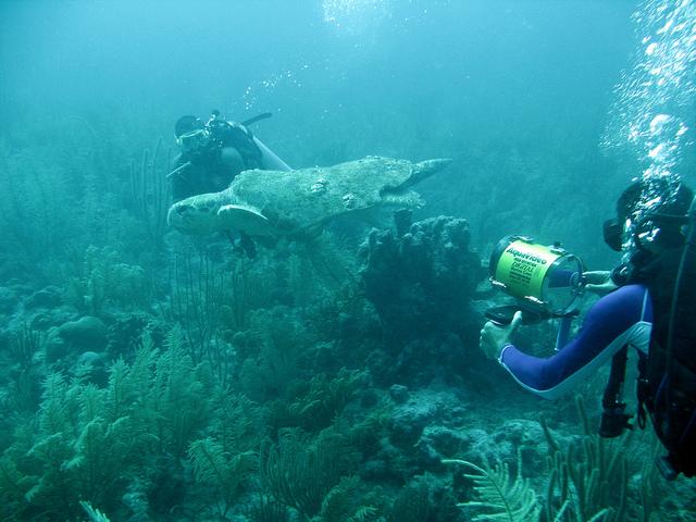 Морская черепаха. Фото