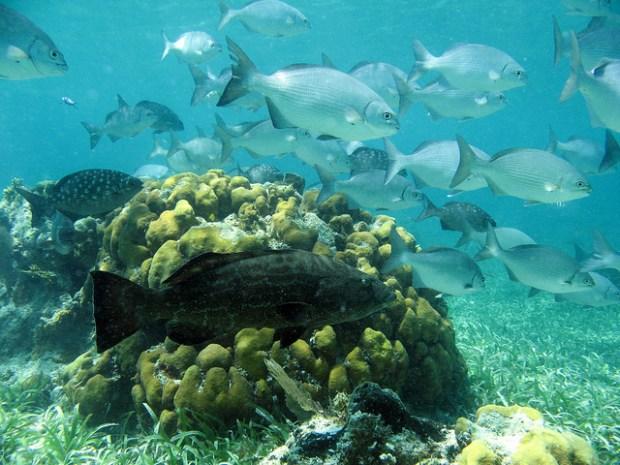 Рыбы. Фото