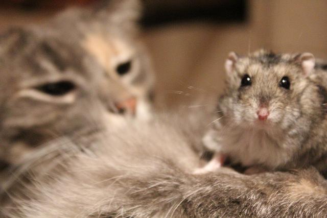Дружба животных. Кошка с мышкой