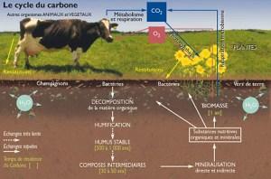 La cycle du carbone