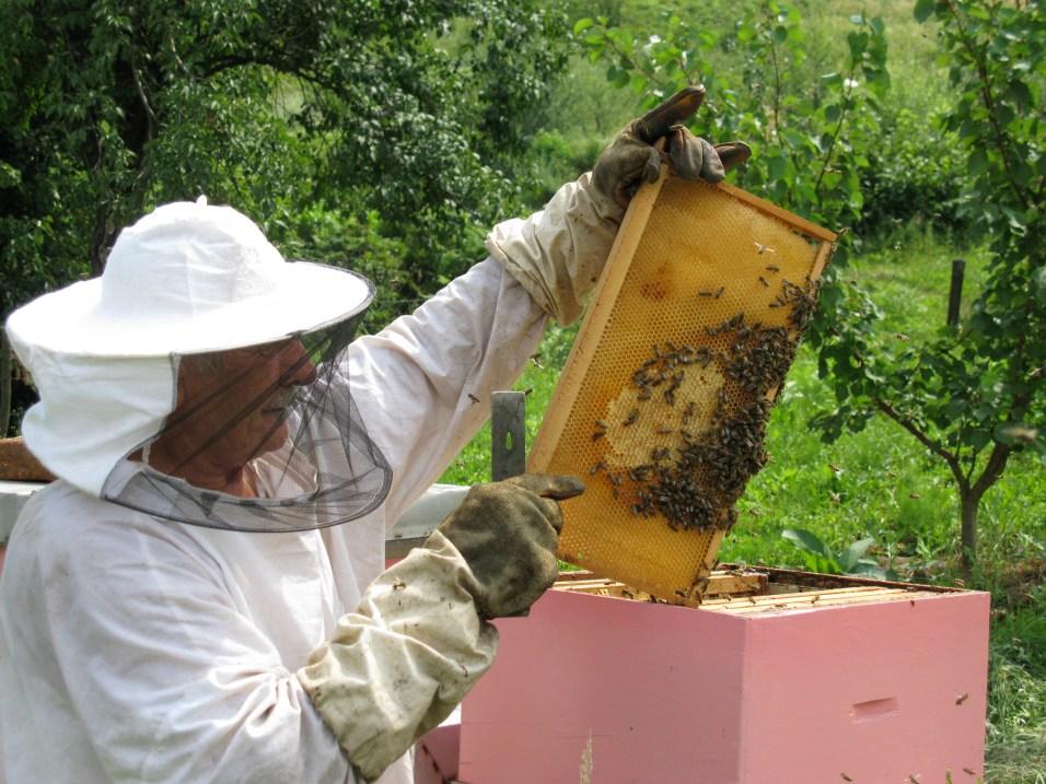 Na obisku pri čebelarju v Bosni