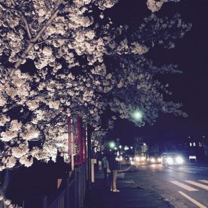 桜 大手町通り