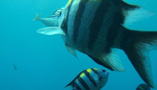 沖縄で自然に泳ぐ魚達を見にブセナ海中公園に行こう!