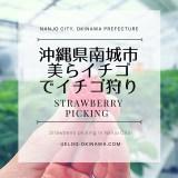 沖縄でイチゴ狩り!南城市の【美らイチゴ】でイチゴ狩り体験してきたよ