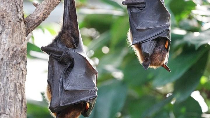 NABU bildet Fledermausbotschafter für Niedersachsen aus