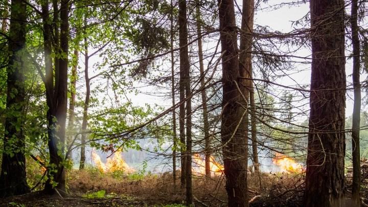 Serie von Waldbodenbränden im Uelzener Ostkreis – Polizei nimmt Tatverdächtigen vorläufig fest
