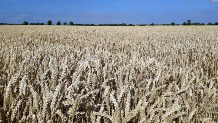 Niedrige Preise nach enttäuschender Ernte