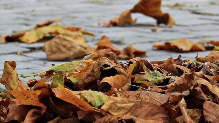 Mehr Laubbäume und bessere Luft: Wäldchen in Kaltenmoor wird umgewandelt