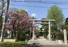 世田谷 桜新町