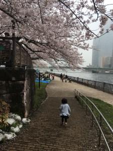 佃公園 桜