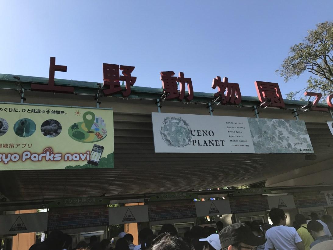 5月5日こどもの日 上野動物園に行ってきました。くるりんのターゲットはライオンさんです。