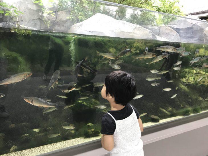 夏休みの仙台うみの杜水族館(第4話)「アナゴ」が筒の中で静かに待機している姿を発見し、背筋がゾ〜