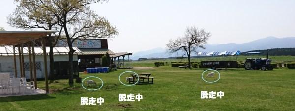 阿蘇うぶやま牧場