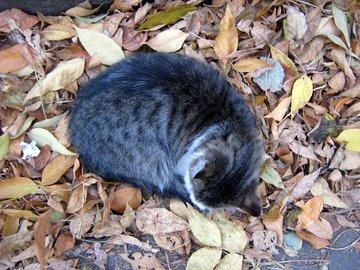 Осенняя усталость может быть вызвана недостатком ...