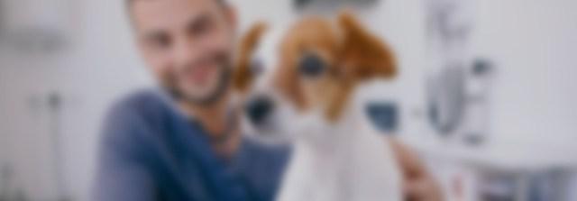 Parásitos gastrointestinales del perro (VET0107)