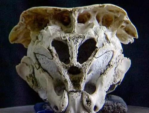 rhodorpe skull alien