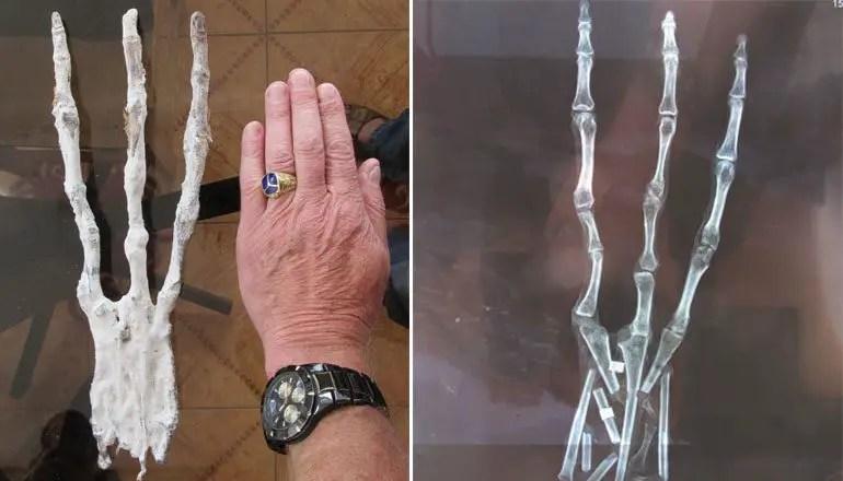 mummified alien hand peru