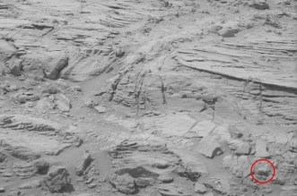 Baby Bear on Mars