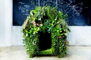 Green dog house