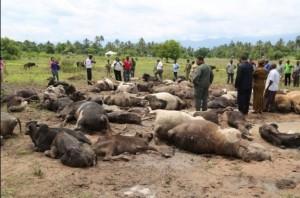 Mvomero3 300x198 - Mapigano ya wakulima na wafugaji wilayani Mvomero yaibuka tena na kuua ng'ombe 79 na mtu mmoja