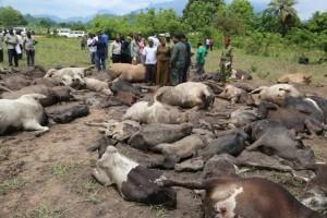 Mvomero7 300x200 - Mapigano ya wakulima na wafugaji wilayani Mvomero yaibuka tena na kuua ng'ombe 79 na mtu mmoja