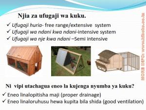 chicken management swahili 003 300x225 - Ufugaji wa kuku kwa njia ya kisasa