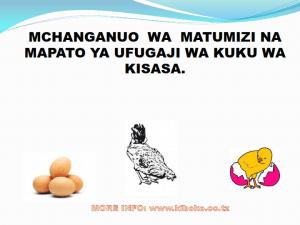 chicken management swahili 008 300x225 - Ufugaji wa kuku kwa njia ya kisasa