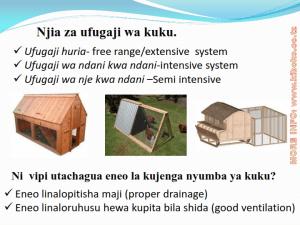 chicken management swahili 003 - Ufugaji wa kuku: namna ya kuanza na mchanganuo wa mapato na matumizi