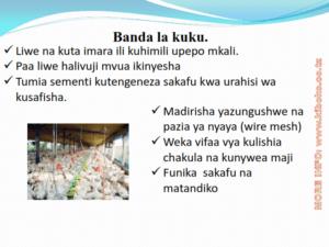 chicken management swahili 004 300x225 - Ufugaji wa kuku: Namna ya kuanza na mchanganuo wa mapato na matumizi