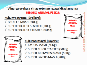 chicken management swahili 007 300x225 - Ufugaji wa kuku: Namna ya kuanza na mchanganuo wa mapato na matumizi