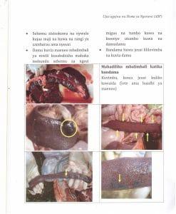 Pict8 247x300 - Ujue Ugonjwa wa Homa ya Nguruwe (African Swine Fever)
