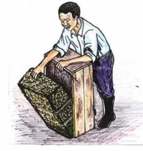 P11 - Kitabu cha ufugaji bora wa ng'ombe wa asili