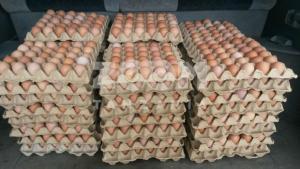 Eggs 1 - Ufugaji wa kuku wa mayai hatua kwa hatua: hatua ya tano