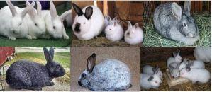 Rabbits Featured - Ufugaji wa sungura