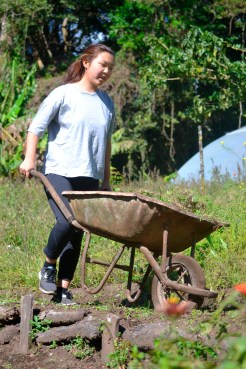 Cho heads for the farm's compost pile, pushing the weeded grass and wildflower remains in a wheelbarrow.