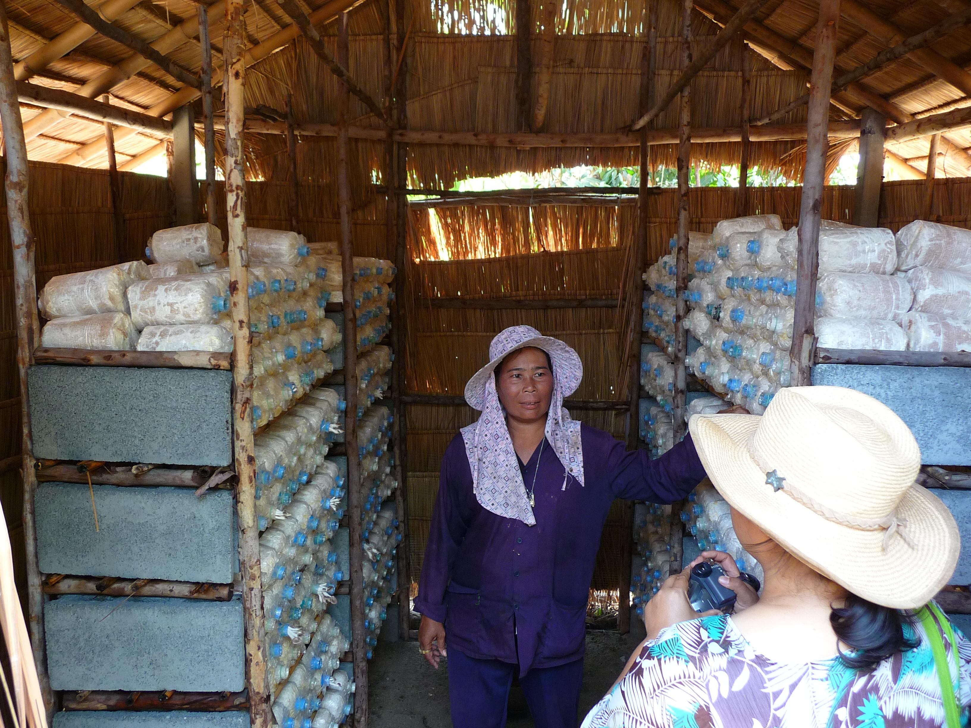 Mushroom production hut