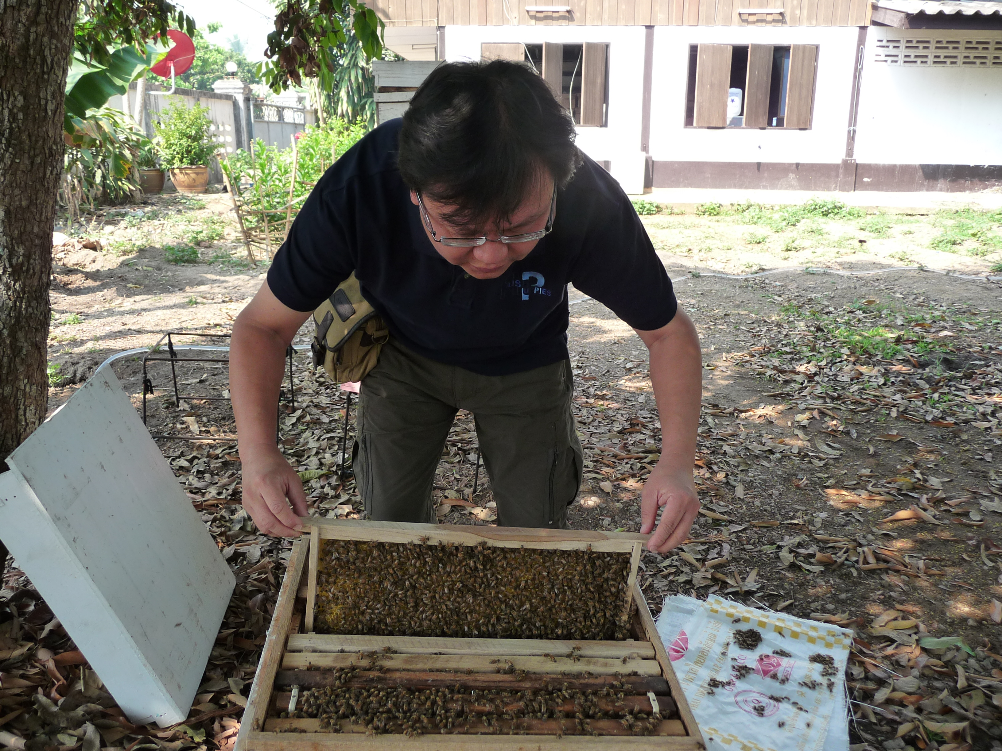 Arranging them back in place before closing up the hive