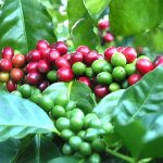 Ministerial statement on closure of coffee factories in Greater Masaka sub-region