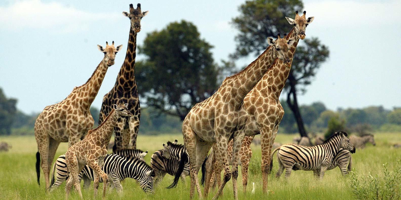 Top Wildlife Reserves in Uganda   Uganda Wildlife Reserves